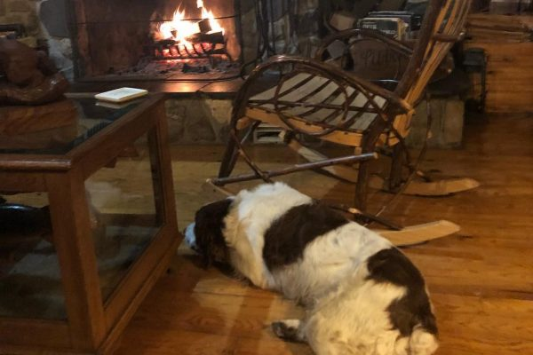 Dog Fireplace