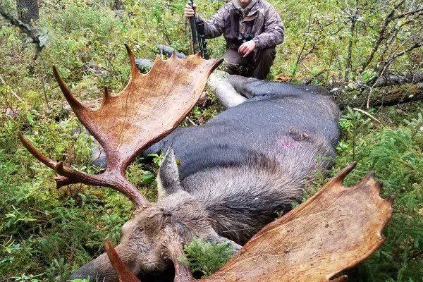 Duke Moose